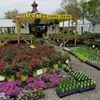 Lucille's garden center