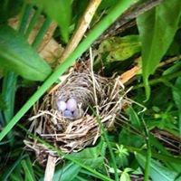 The Nest on Main