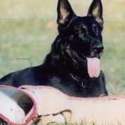 O.G. Nashville Schutzhund und Polizei