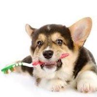 Pet Health Plus Veterinary Hospital