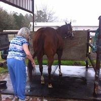BR Live Oak Quarter Horses LLC