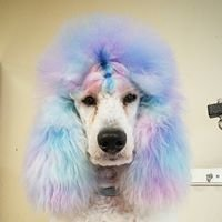 Artistic Pet Grooming and Boarding