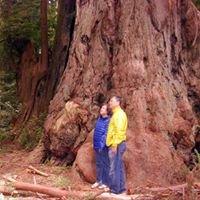 Redwood National Park Adventures