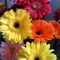Kickingbird Flowers & Gifts