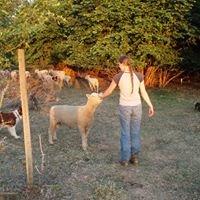 Henny Farms - Local Lamb