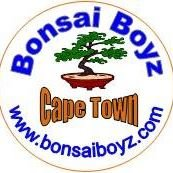 Bonsai Boyz Cape Town