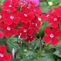 Central Missouri Master Gardener Plant Sale