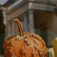 Virginia Pumpkin Growers Association