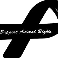 Animal Allies Nation