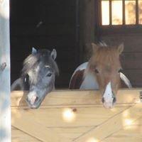 Beacon Hill Horse Transportation