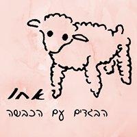 אחו - הבגדים עם הכבשה
