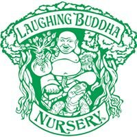 Laughing Buddha Nursery