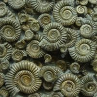 Natural Wonders Ltd. (Fossils-uk.com)