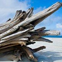 Driftwood Jacksonville Beach