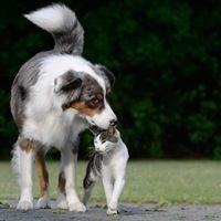Evidensia Djursjukvård