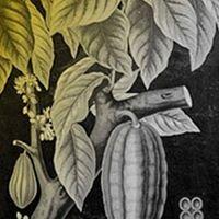 Chokladskolan - Cacao & Co Chocolate School