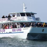 Rudee Flipper Dolphin and Whale Watching Tours