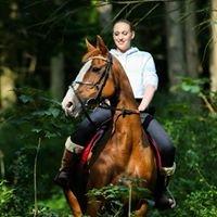 Matt's Equestrian Photography