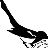 Magpie Designs