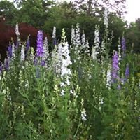 The Larkspur Party