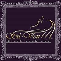 Sil-Ven Black Arabians