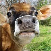 Carolina Farmhouse Dairy