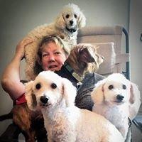 Top Dog Salon