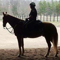 Metro Nashville Police Horse Mounted Patrol