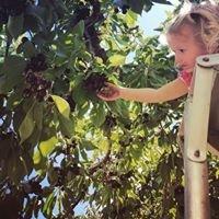 Hidden Acres Orchards