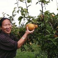 Virginia Gold Orchard