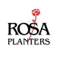 Rosa Planters