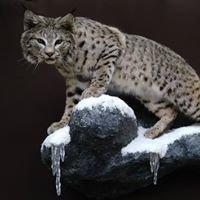 Wildlife Creations Taxidermy