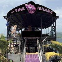 Pink Iguana
