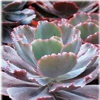 Horst Comércio de Cactus