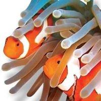 Get Tanked Aquariums