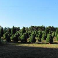 Helms Christmas Tree Farm