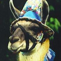 Stoney the Party Llama