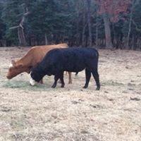 Carolina Farm Fresh Meats