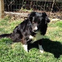 Companion Dog Training School