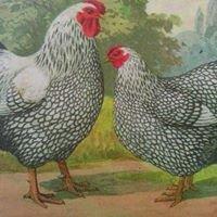 2 Cool Chicks
