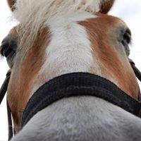 Equitazione Lilhoff