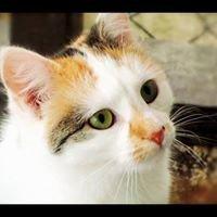 Animal Care Turangi