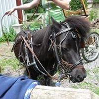 Playmor Farm Miniature Horse Rescue Inc.