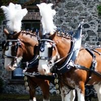 Glebeview Clydesdale Wedding Services