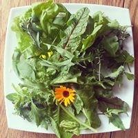 Hackney Salad