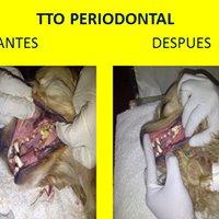Odontologia Veterinaria