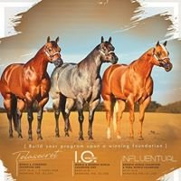 Terry Bradshaw Quarter Horses