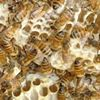 Aquidneck Honey