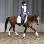 Lane Cove Dressage
