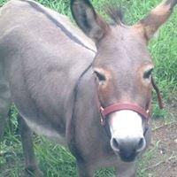 Gallop Horse Rescue of North Florida, Inc.